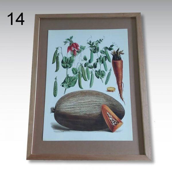 illustration plantes potageres Vilmorin